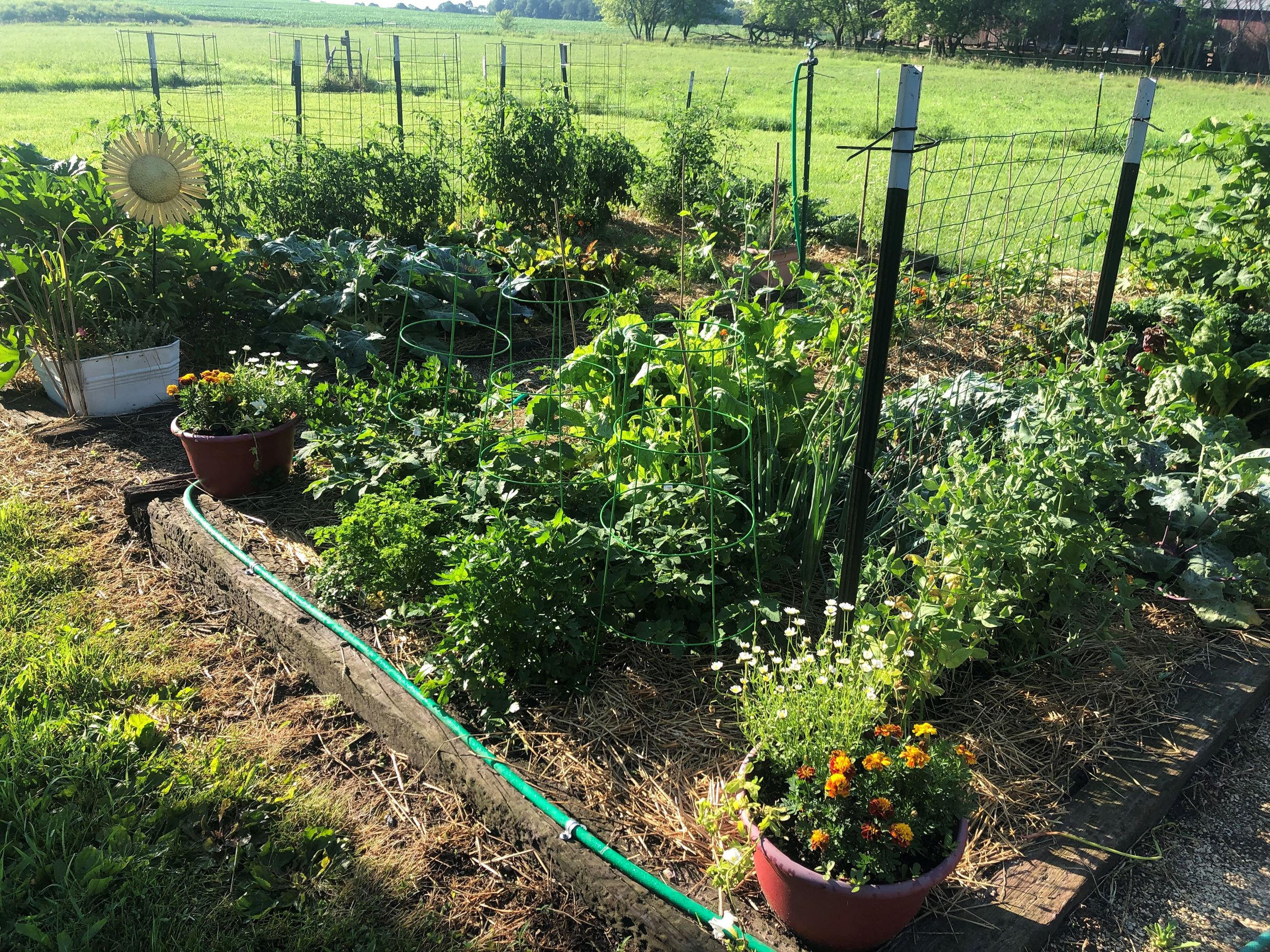 A garden with many different types of vegetables in it.