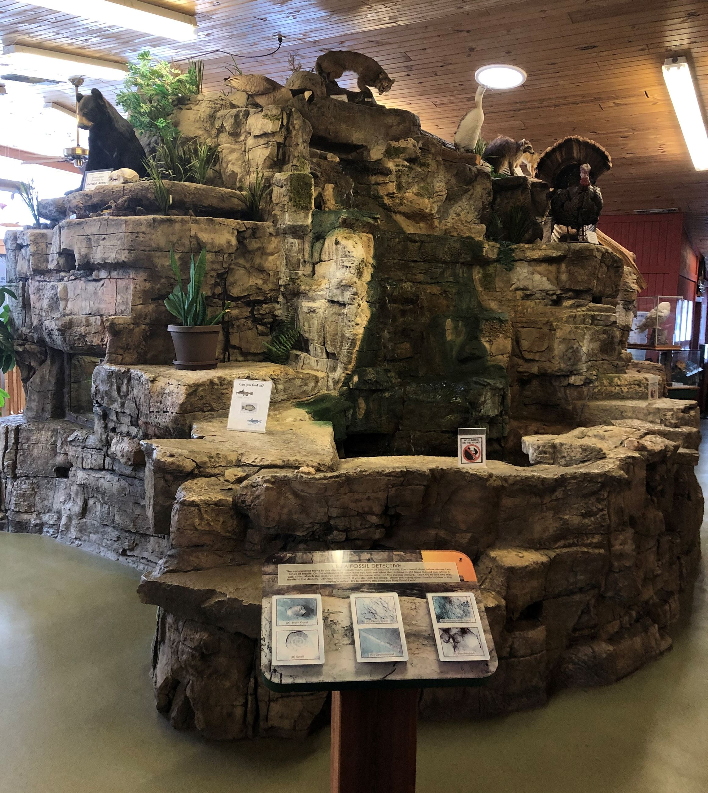 An indoor rock structure with a waterfall and pond. There are taxidermed animals on the rocks.