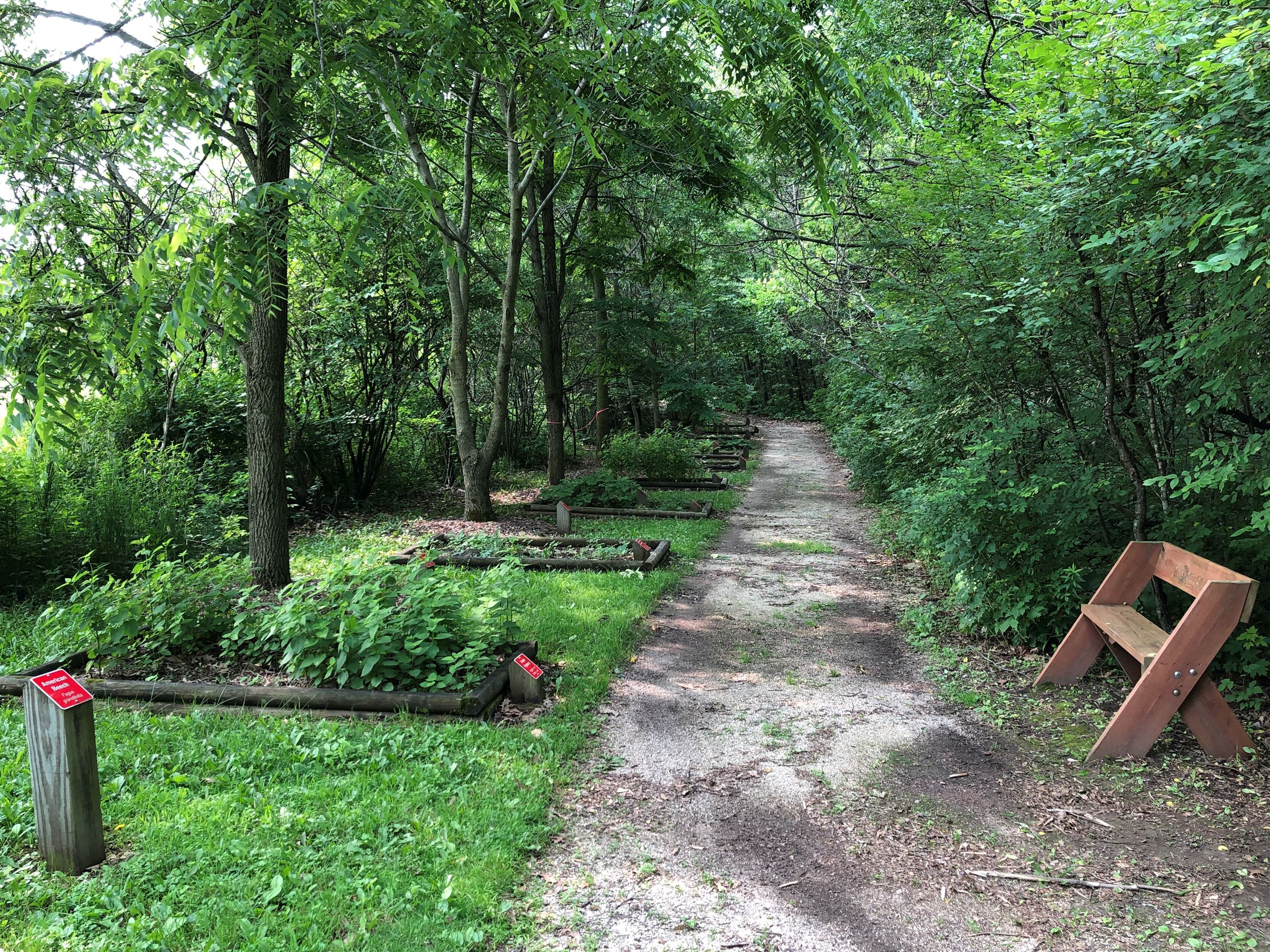 A trail through an arboretum. There are wooden edged garden beds, trees and a wooden bench